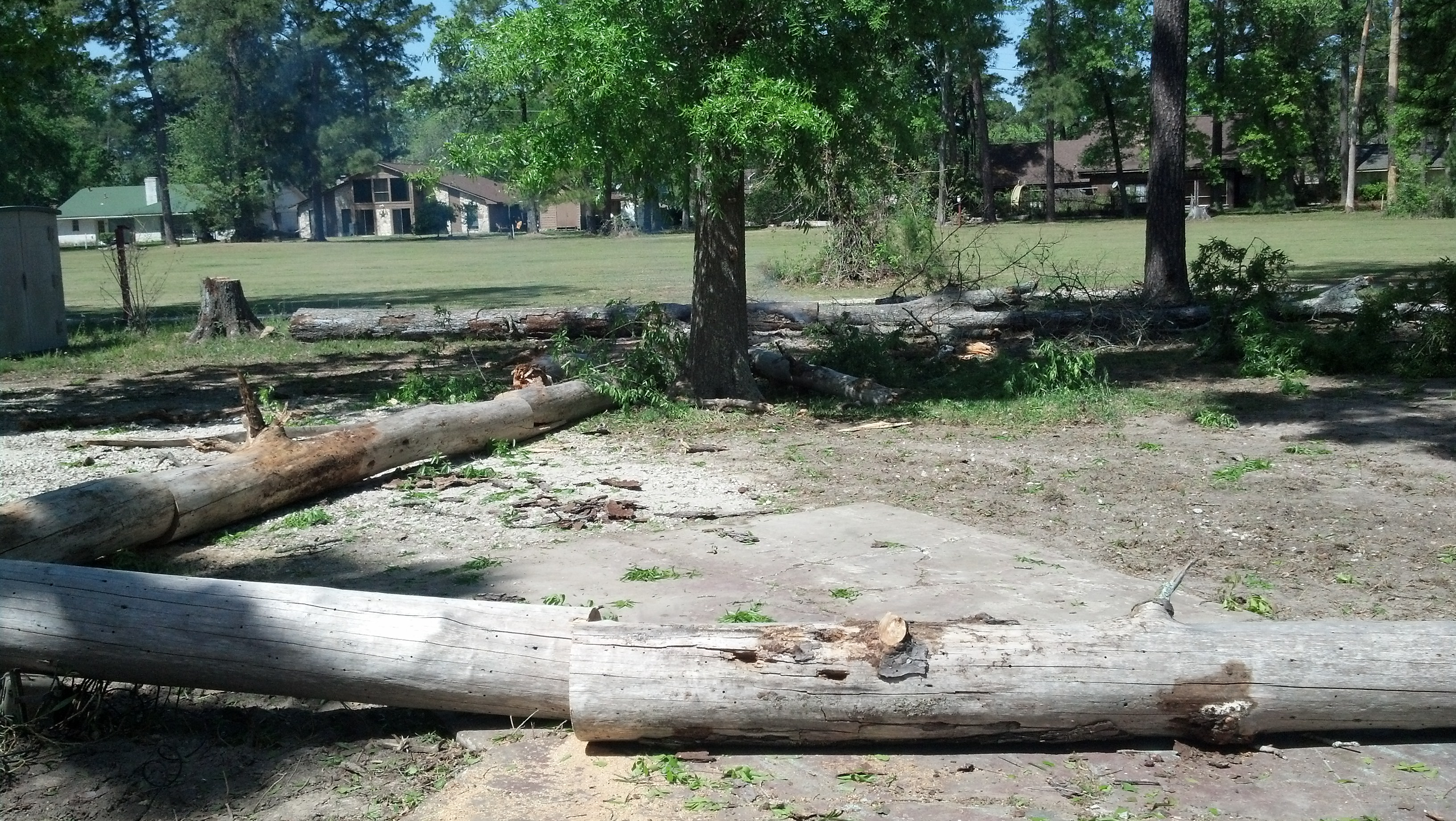 tree clearing dead pines