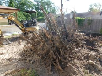 Large stump excavated