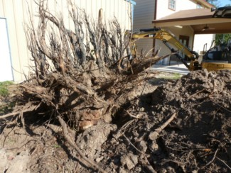 large stump excavated 2